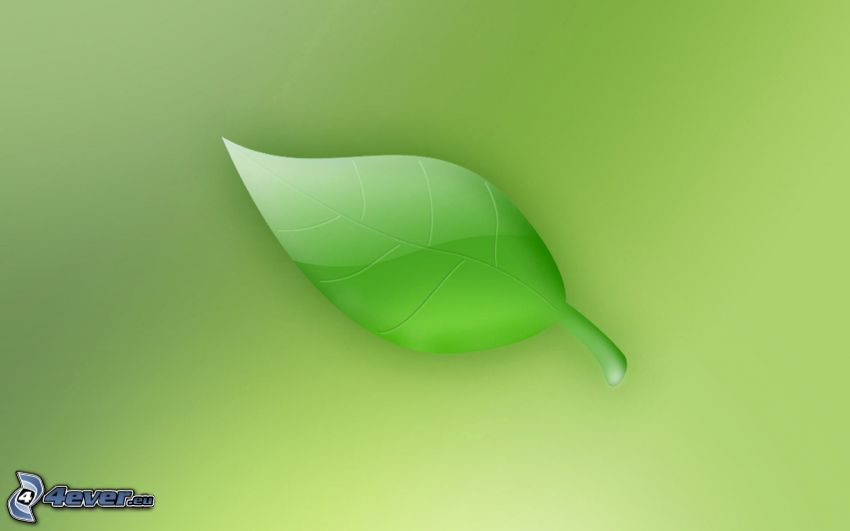 green leaf, green background