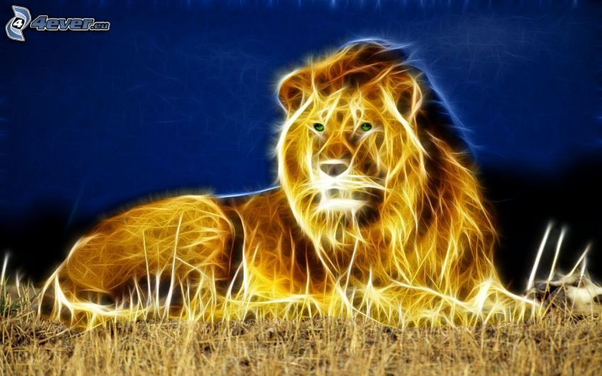 lion, night
