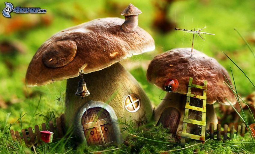 mushrooms, houses, ladybug, ladder