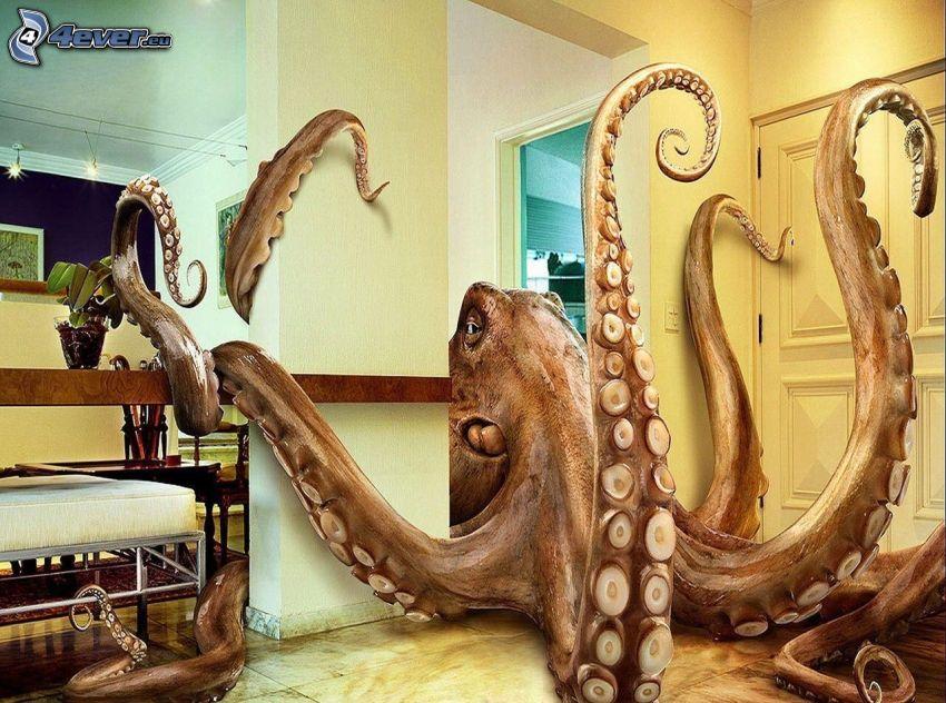 octopus, room
