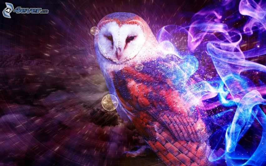 owl, colored smoke