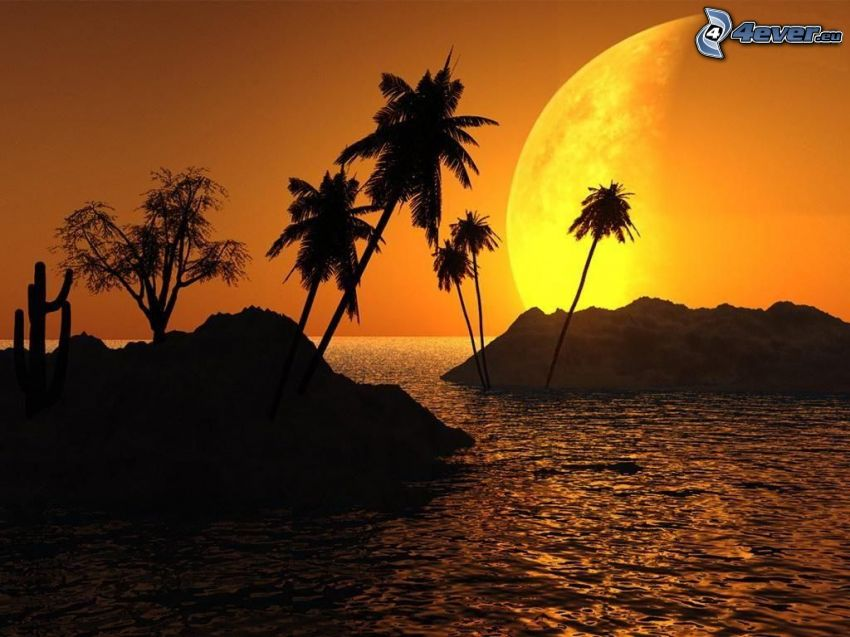 palm trees at sea, moon