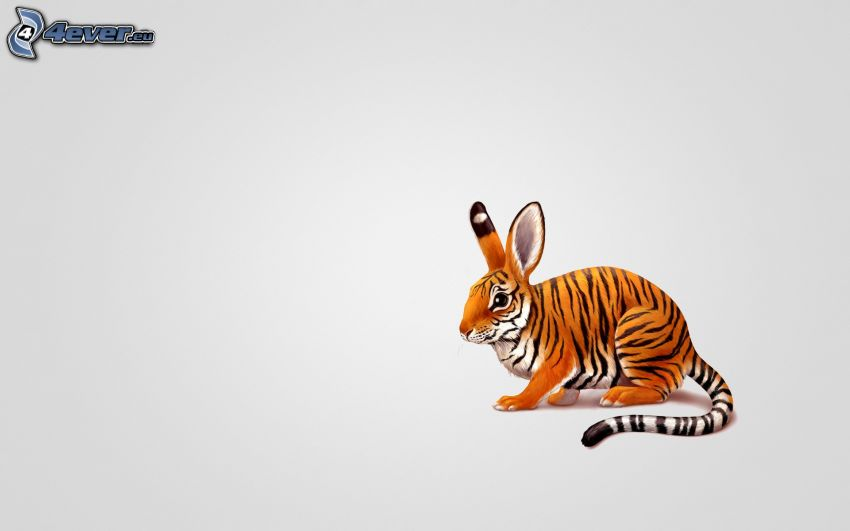 rabbit, tiger