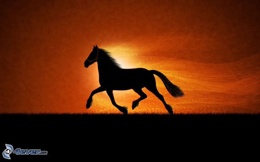 running horse, silhouettes of horses