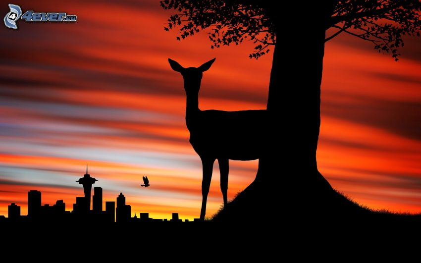 silhouette, silhouette of the city, doe, silhouette of tree, evening dawn