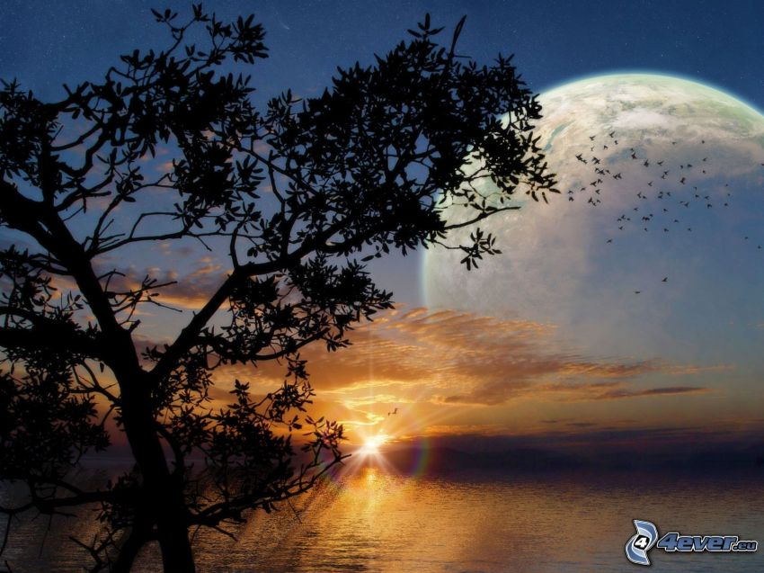 sunset behind the sea, silhouette of tree, sunbeams, birds, planet