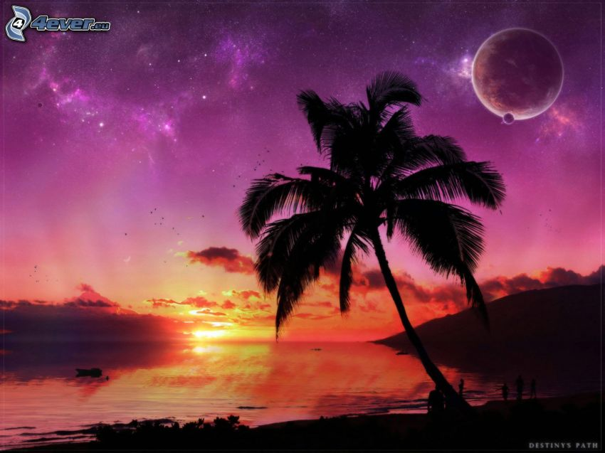 sunset over the beach, palm tree, moons, stars