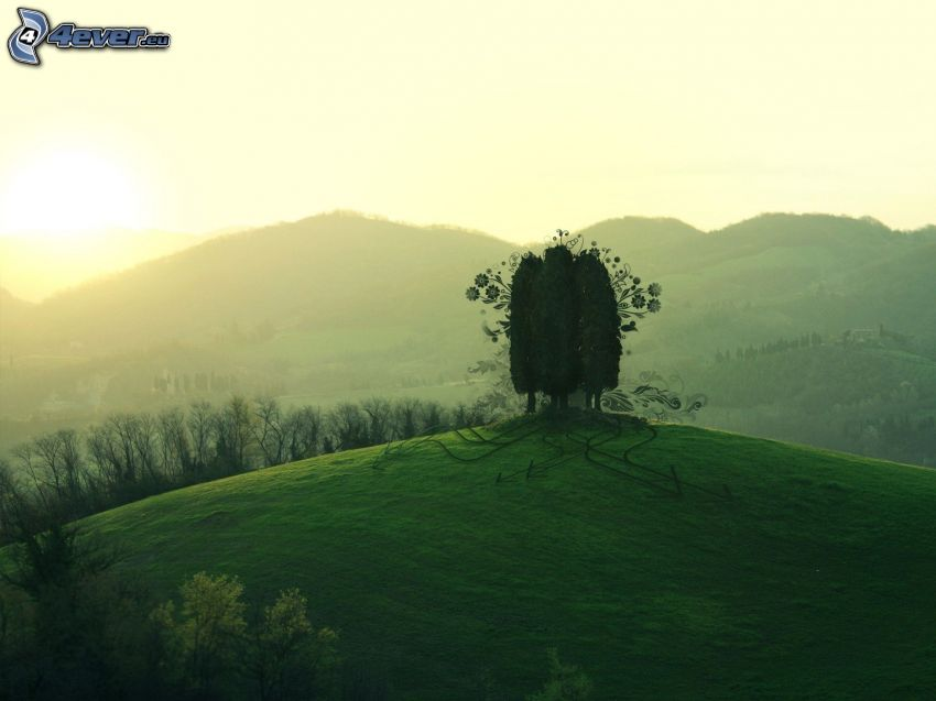trees, hills, sunset