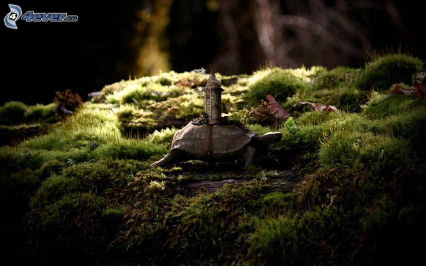 turtle, tower, moss
