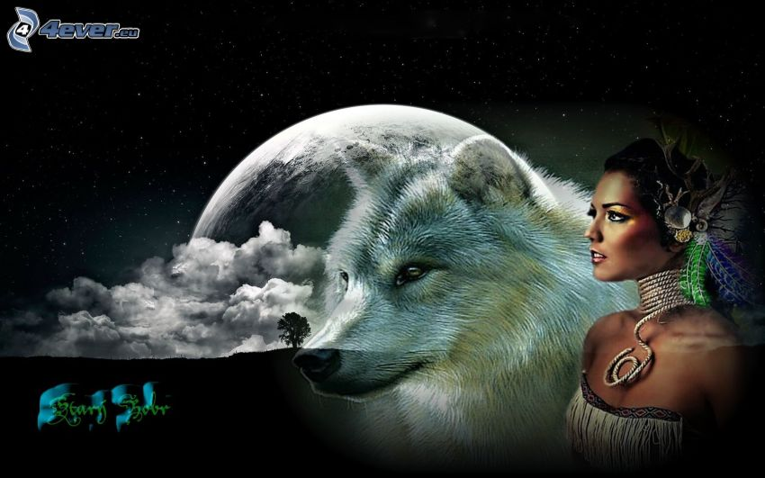 indian, white wolf