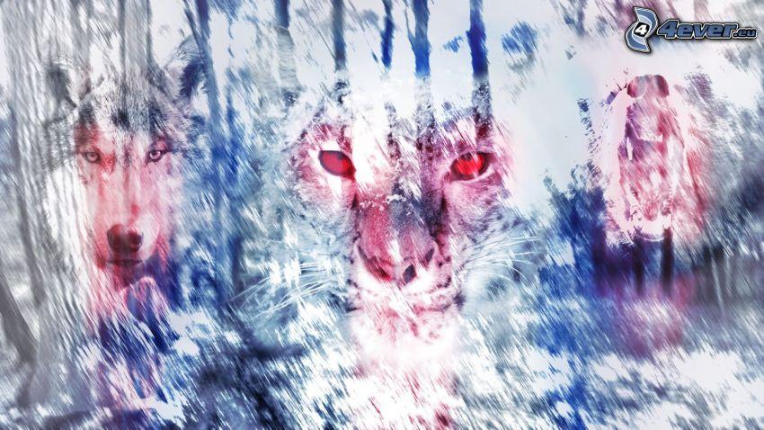 leopard, wolf, bear