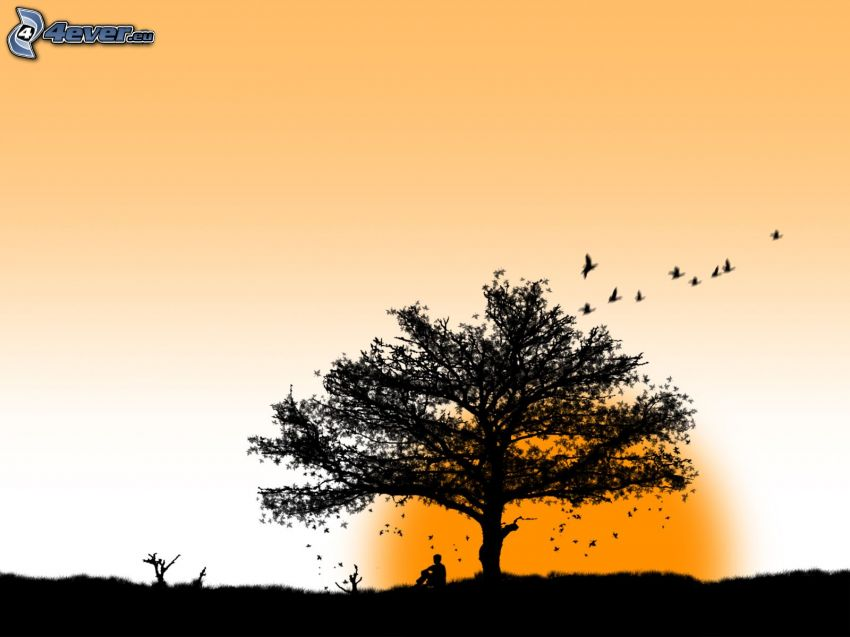 lonely tree, flock of birds, man, sun, silhouette