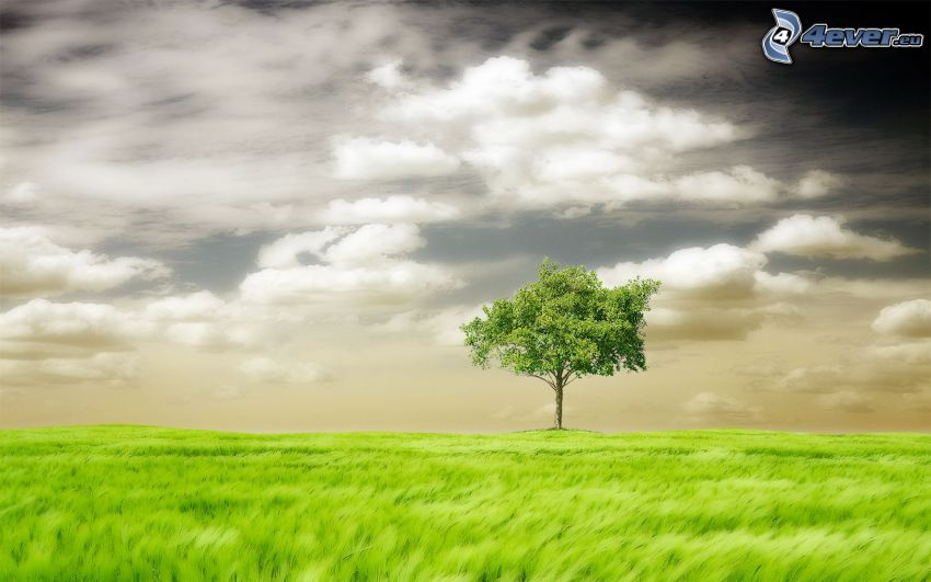 lonely tree, grass, clouds