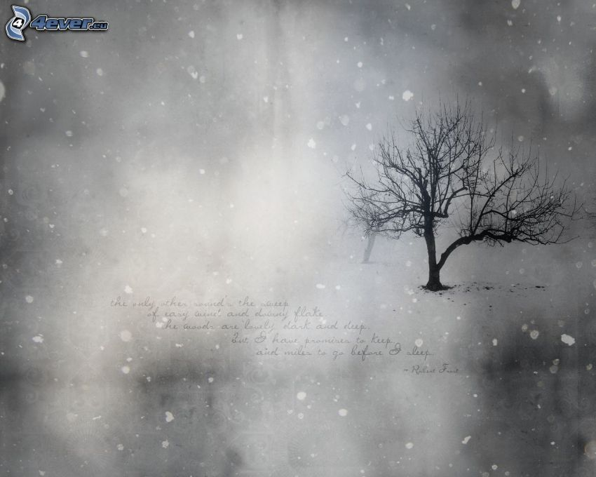 lonely tree, snowfall, black and white