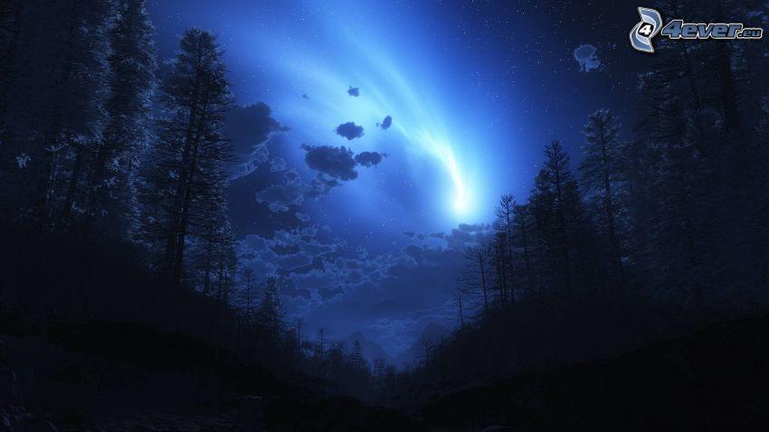 night, trees