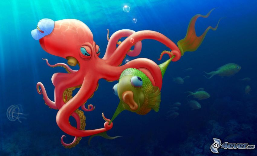 octopus, fish