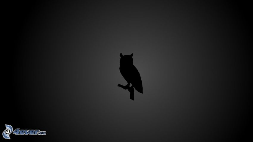 owl, silhouette of the bird