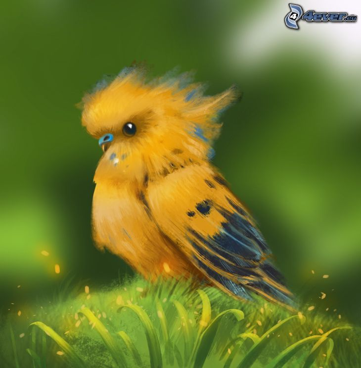 parrot, yellow bird