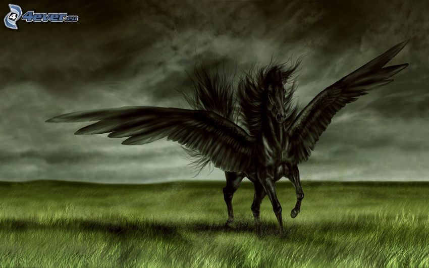 Pegasus, black horse, wings, meadow, clouds