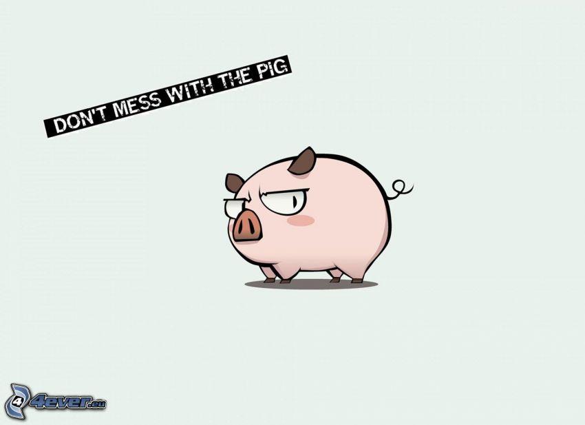 pig, text