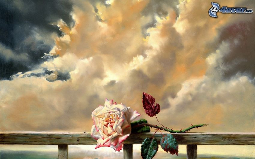 rose, clouds