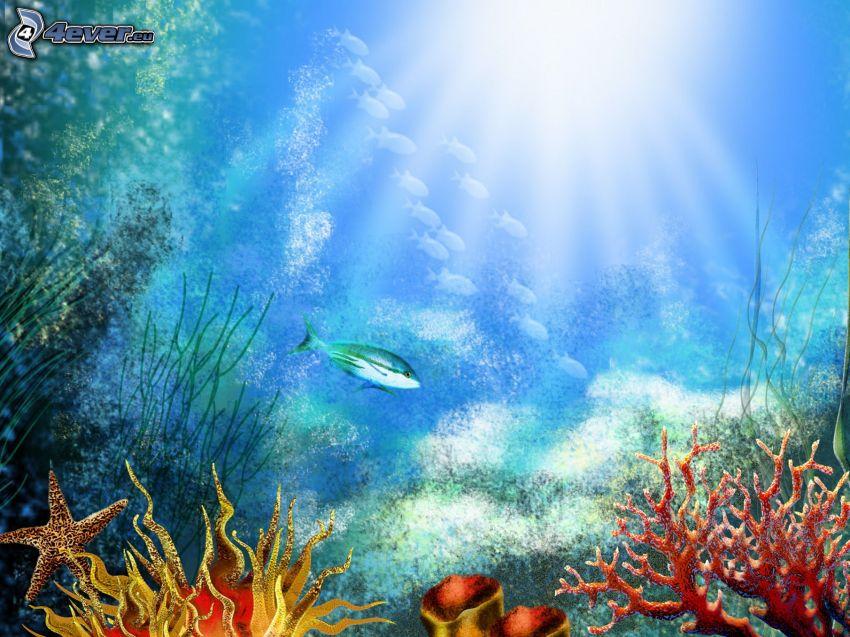 sea, fish, corals, starfish, sunbeams