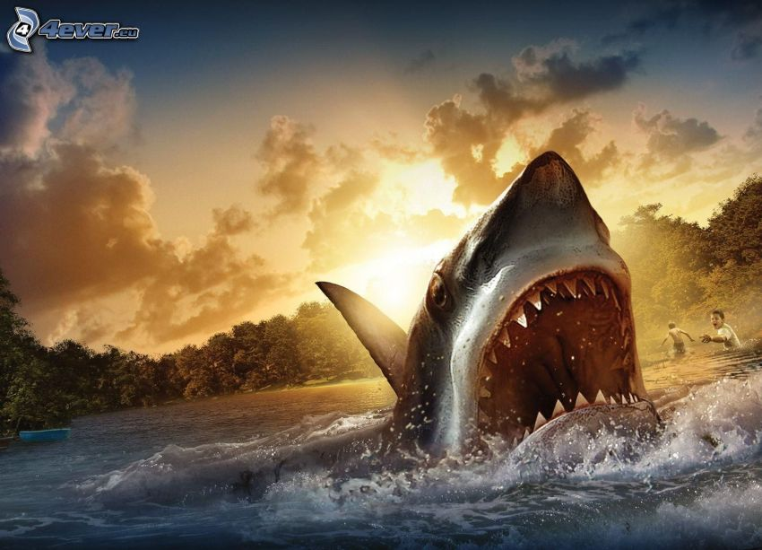 shark, muzzle, teeth, water, children, sun