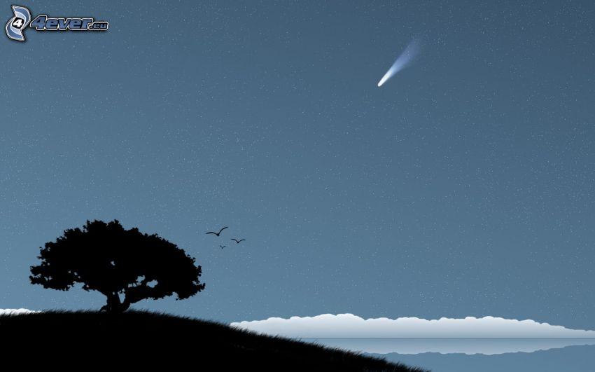 silhouette of tree, comet, sea