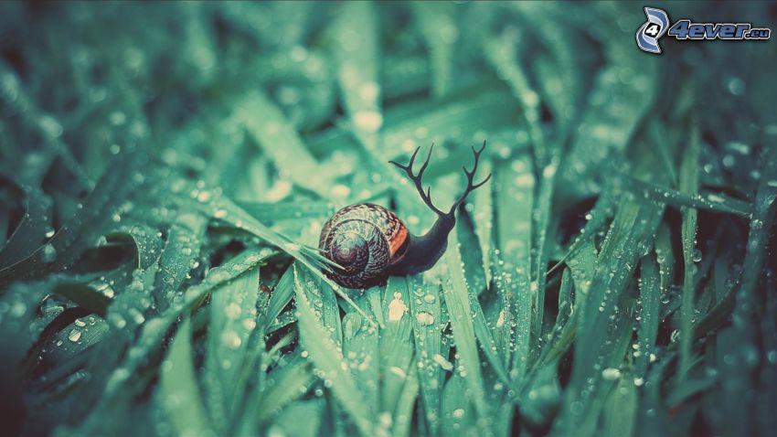 snail, deer, grass