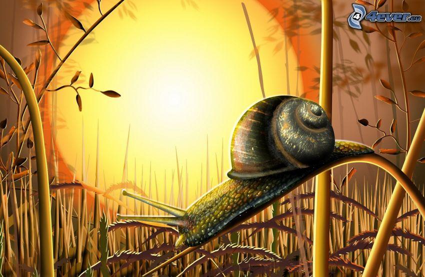 snail, sun, straw