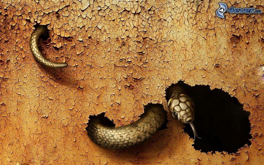 snake, hole