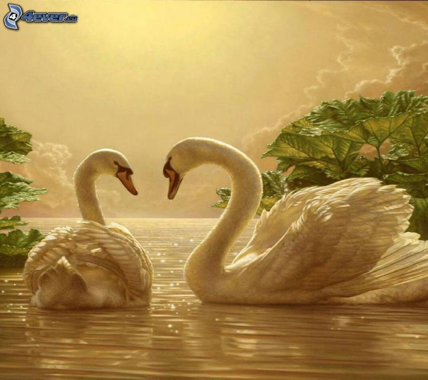 swans, open sea, leaves