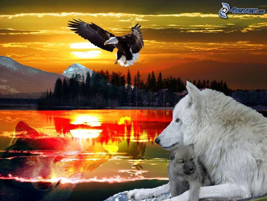 white wolf, cub, Bald Eagle, lake