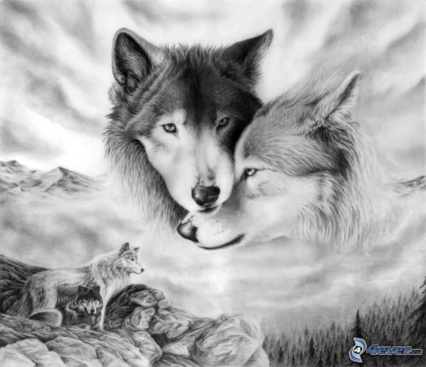 wolf and she-wolf, trees, hills