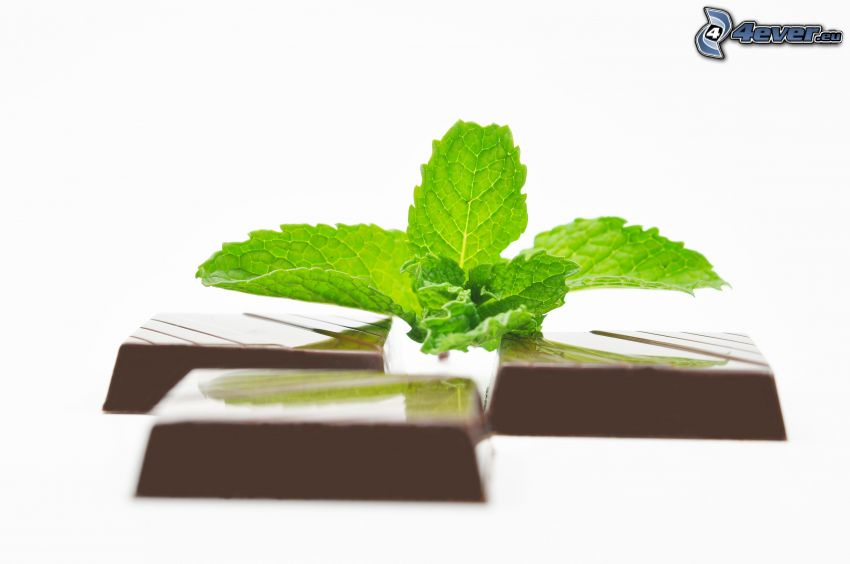 chocolate, mint leaves