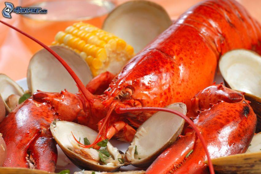 lobster, corn, shells