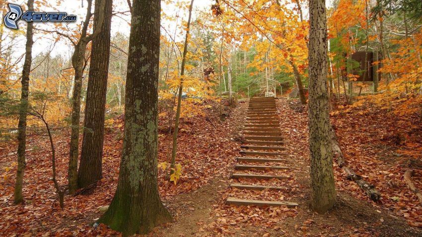 stairs, colorful autumn trees, fallen leaves