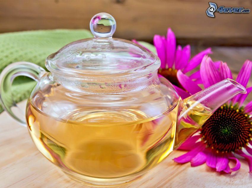 teapot, Echinacea