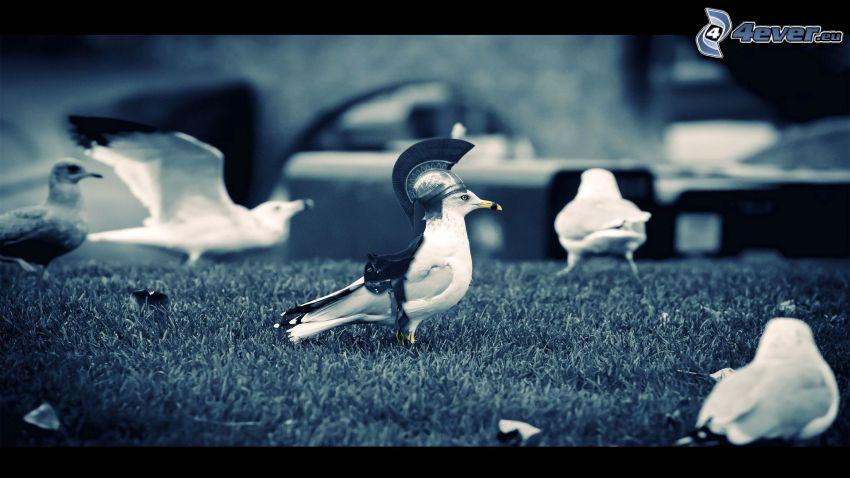 birds, roman soldiers