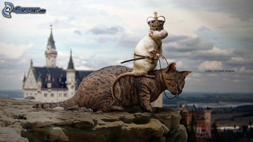 cat, rat, crown, rock, king, Neuschwanstein castle