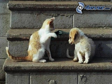 cat and dog, hate, pistol, murder, stairs