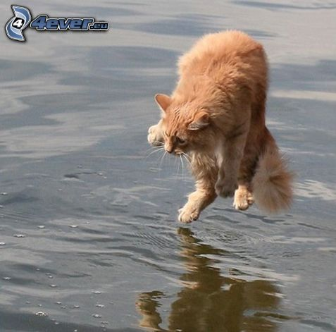 cat over water, fear