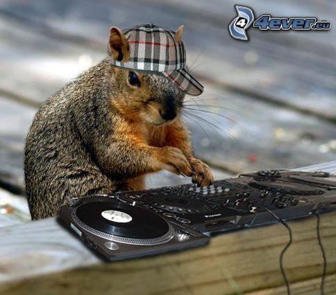DJ, squirrel, cap, DJ console