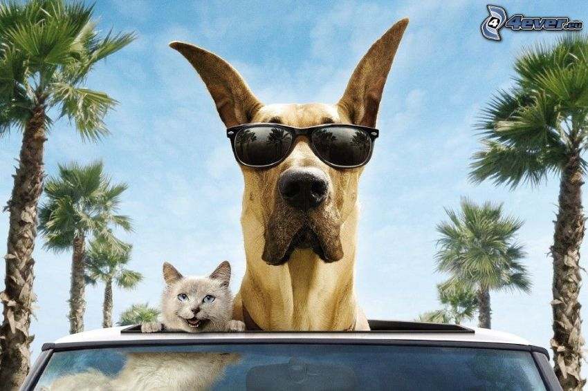 dog and cat, sunglasses, palm trees