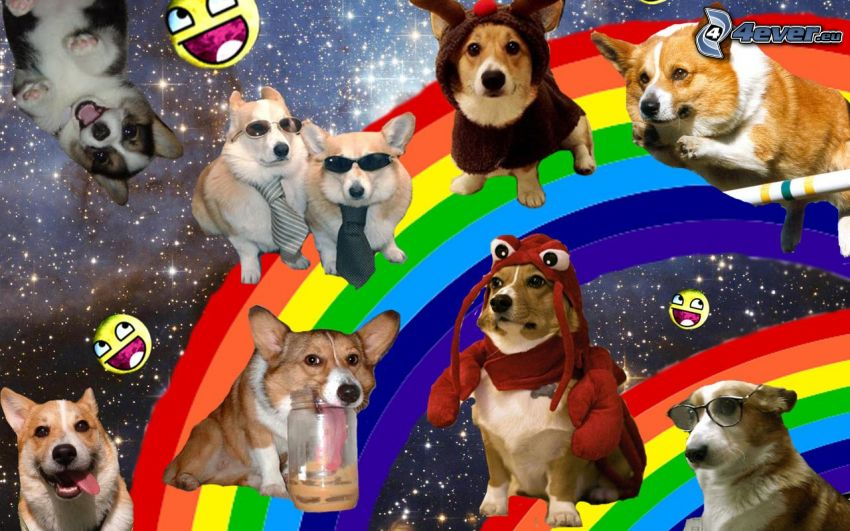 dogs, costume, smiles, rainbow, starry sky