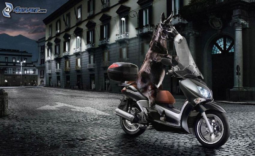 donkey, Yamaha, motocycle, street, road, pavement, house