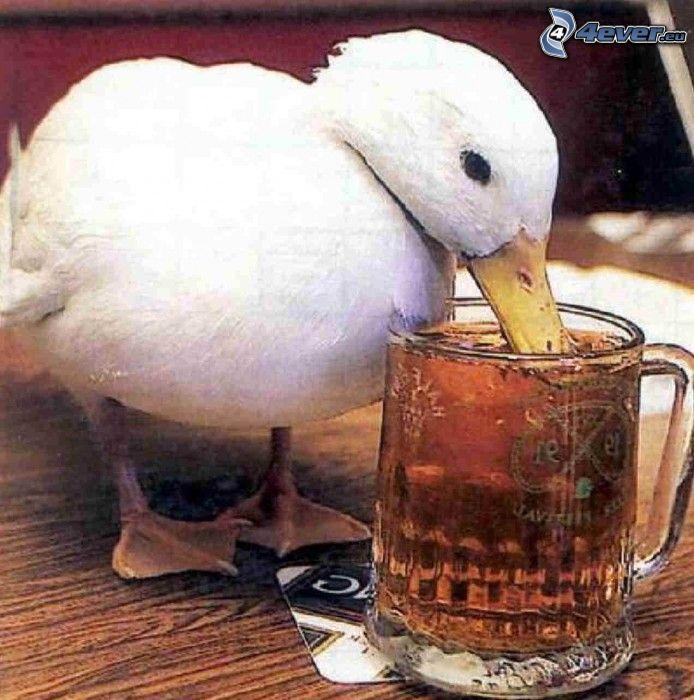 duck, beer