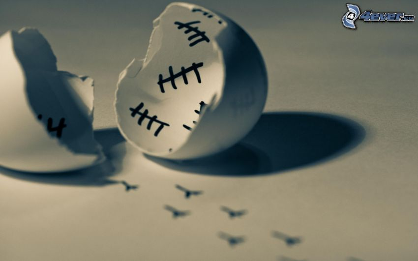 eggshell, tracks