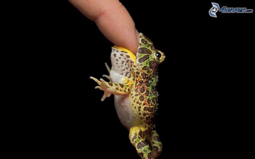 frog, finger