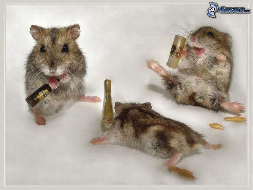 hamsters, alcohol, funny